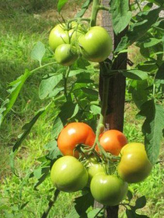 gardening-in-west-virginia-2
