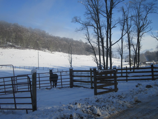 home-in-west-virginia-with-horses-in-field